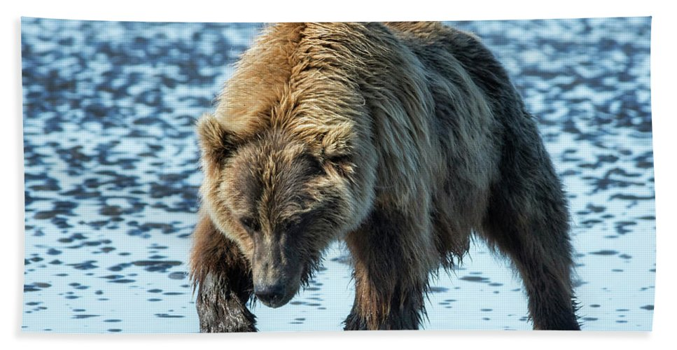Grizzly Bear Bath Sheet featuring the photograph Tiptoe Through The Water by Claudia Kuhn