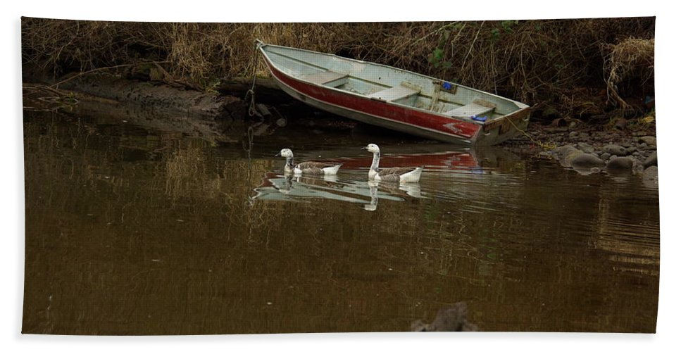 Geese Bath Sheet featuring the photograph To Float Or Not To Float by Cindy Johnston