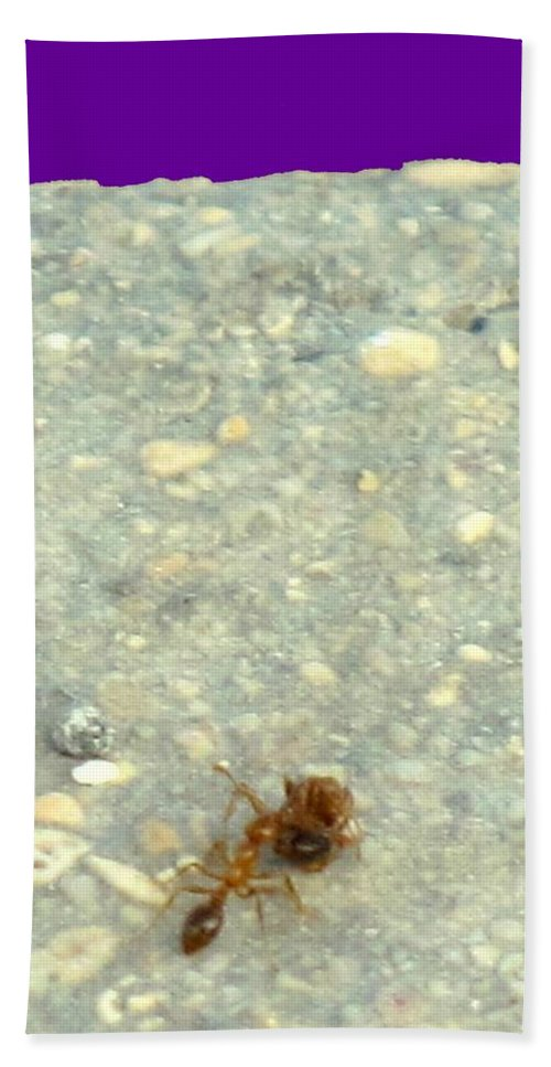 Ant Hand Towel featuring the photograph To The Edge by Ian MacDonald