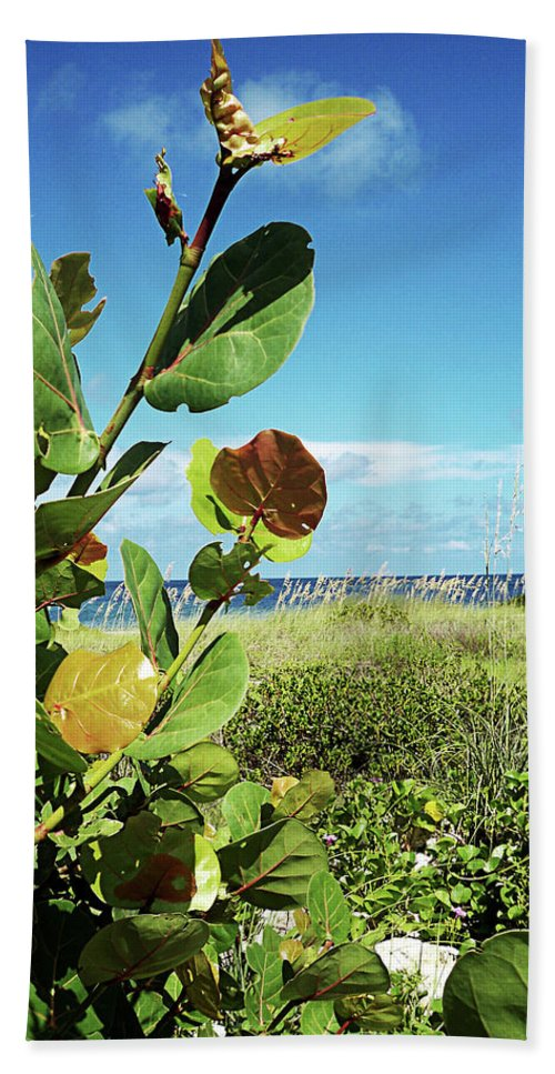 Florida Hand Towel featuring the photograph To The Sky Gp by Chris Andruskiewicz