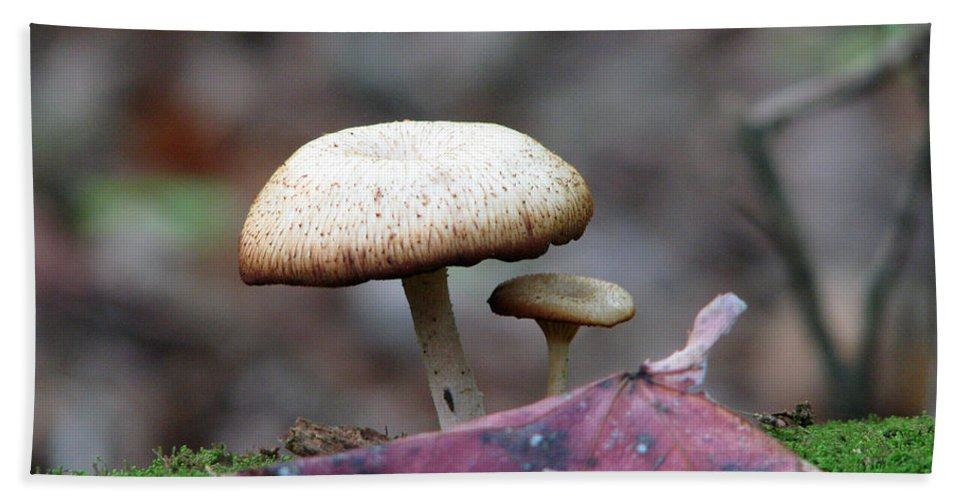 Toad Stool Bath Sheet featuring the photograph Toad Stool Iv by Stacey May