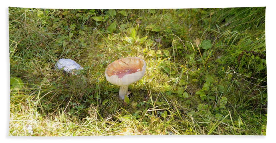 Alpine Hand Towel featuring the photograph Toadstool Grows On A Forest Floor. by Ilan Rosen