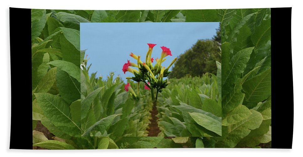 Tobacco Bath Sheet featuring the photograph Tobacco Blossom by Bob Welch