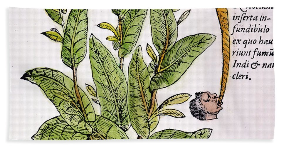 1576 Hand Towel featuring the photograph Tobacco Plant by Granger