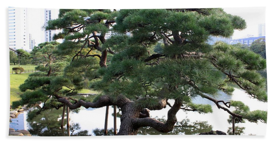 Tokyo Tree Hand Towel featuring the photograph Tokyo Tree by Carol Groenen