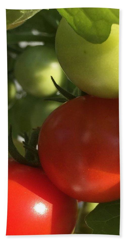 Tomatoes Bath Sheet featuring the photograph Tomatoes by Lisa Cassinari