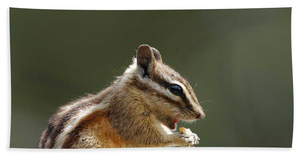 Squirrel Hand Towel featuring the photograph Tongue In Cheek by Donna Blackhall