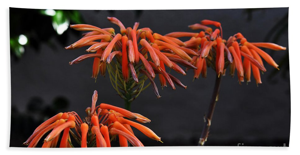Clay Hand Towel featuring the photograph Top Of Aloe Vera by Clayton Bruster