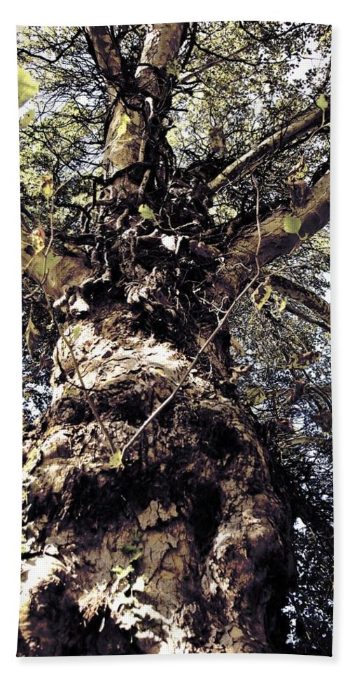 Tree. Forest. Leaf Hand Towel featuring the photograph Topiary by Scott Wyatt