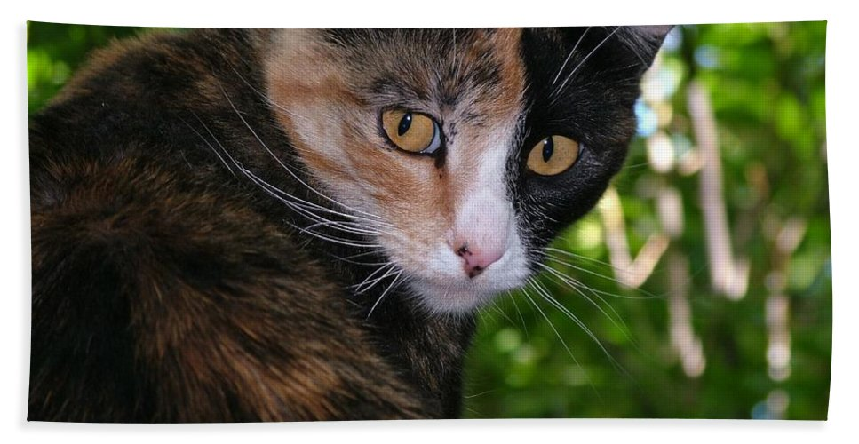 Cat Bath Sheet featuring the photograph Tortie by Tracey Vivar