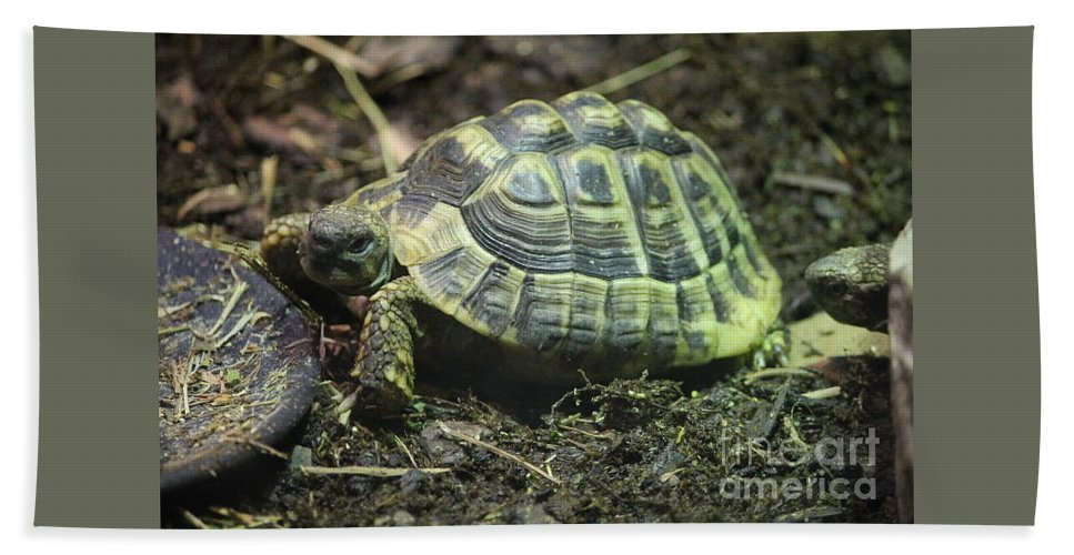 Hermann's Tortoise Buffalo Zoo Buffalo Bath Sheet featuring the photograph Tortoise Photobomb by Katherine Ruth