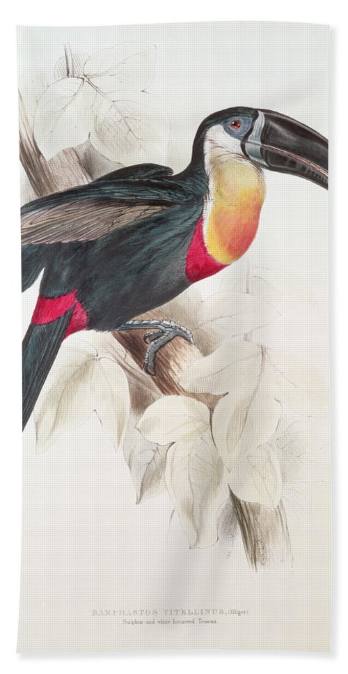 Sulphur Bath Towel featuring the painting Toucan by Edward Lear