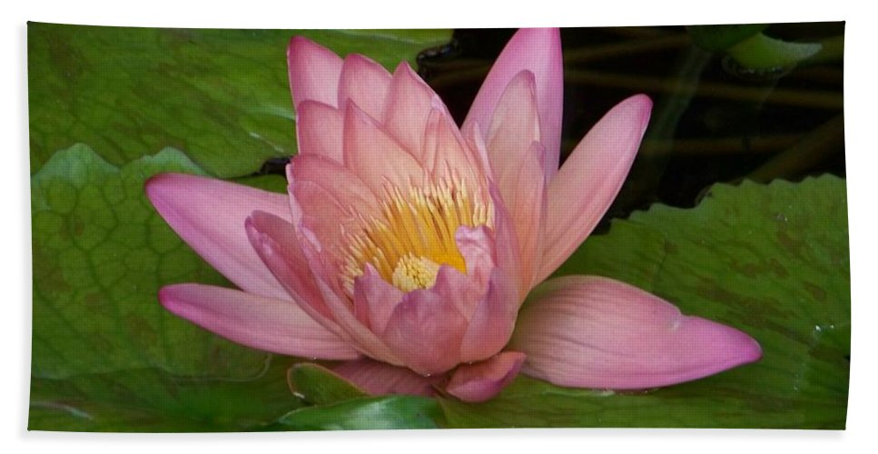 Water Lilly Bath Sheet featuring the photograph Touch Of Pink by Karen Wiles