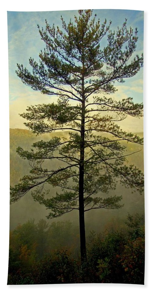 Pine Creek Gorge Bath Towel featuring the photograph Towering Pine by Suzanne Stout