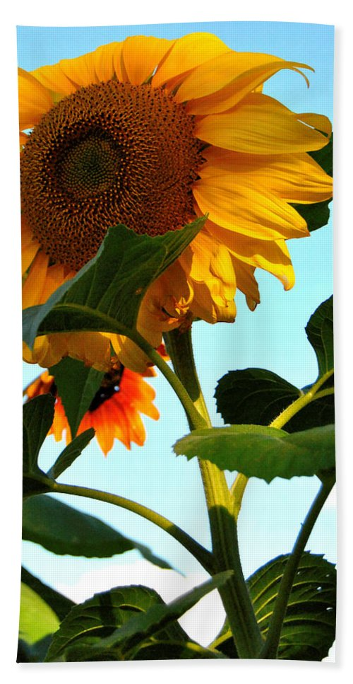 Sunflower Photography Hand Towel featuring the photograph Towering Sunflower by Kathleen Sartoris