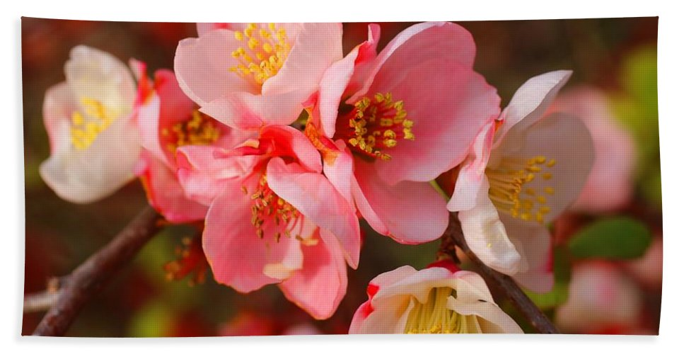 Quince Bath Towel featuring the photograph Toyo-nishiki Quince Blooms by Kathryn Meyer