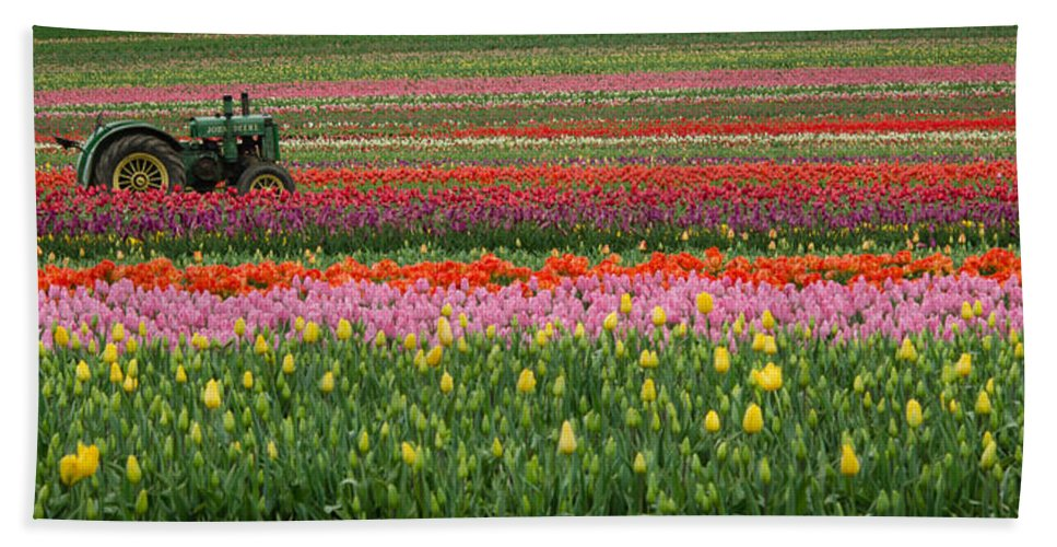 Woodburn Hand Towel featuring the photograph Tractor Among The Tulips by Don Schwartz