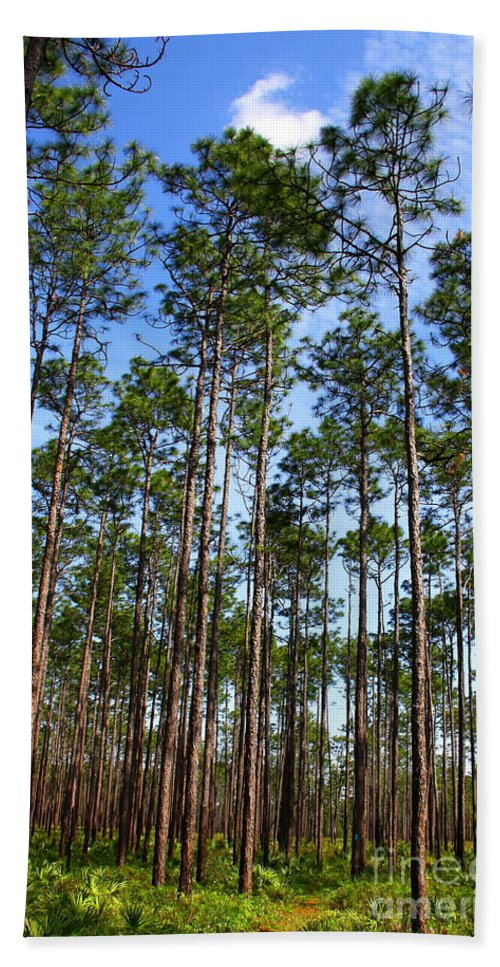 Wright Lake Loop Trail Bath Sheet featuring the photograph Trail Through The Pine Forest by Barbara Bowen