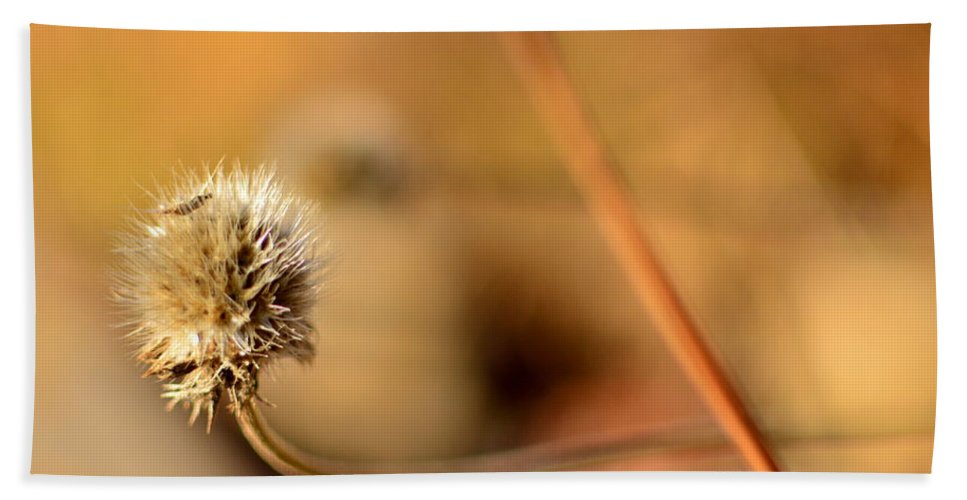 Plant Bath Sheet featuring the photograph Tranquil by Rachel Dyson Hrpcek
