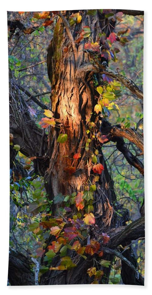 Tree Bath Sheet featuring the photograph Tree And Vine by Michael Hills