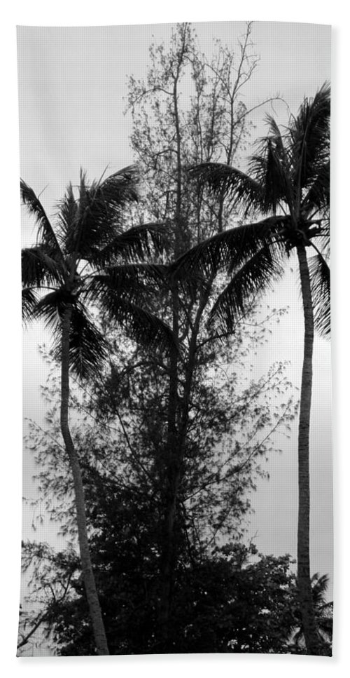 Palms Hand Towel featuring the photograph Tree Between The Trees by Deborah Crew-Johnson