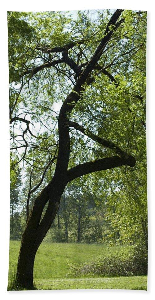 Tree Bath Sheet featuring the photograph Tree Dali by Sara Stevenson