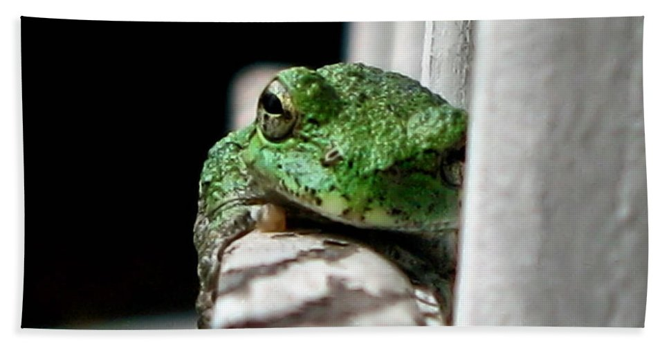 Tree Frog Hand Towel featuring the photograph Tree Frog by September Stone