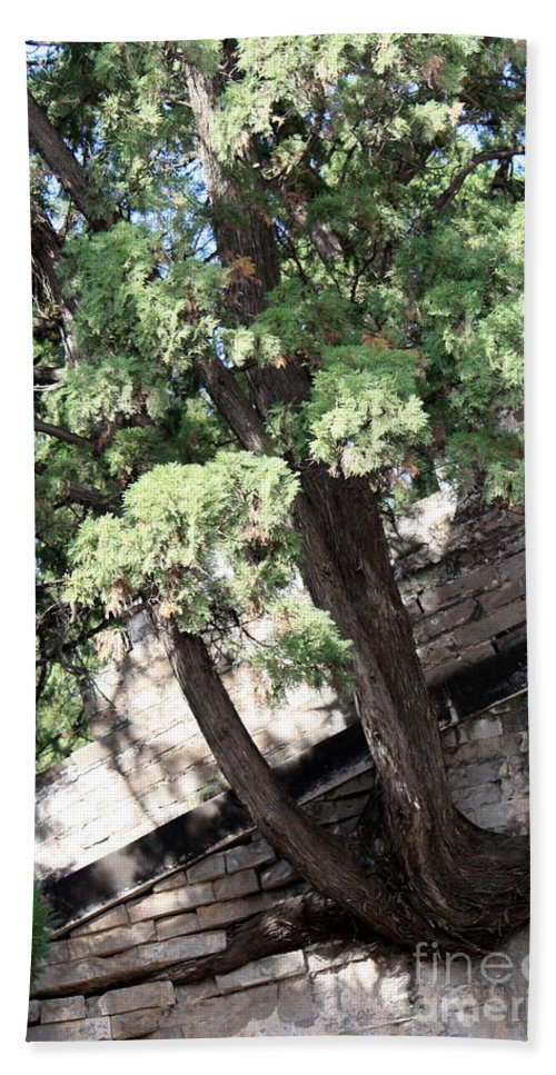 China Bath Towel featuring the photograph Tree Growing Through Wall by Carol Groenen
