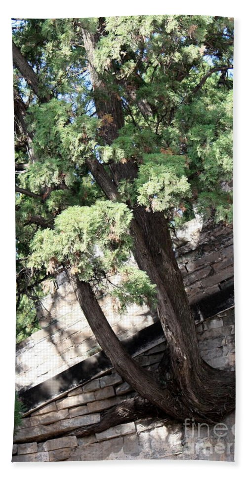 China Bath Sheet featuring the photograph Tree Growing Through Wall by Carol Groenen