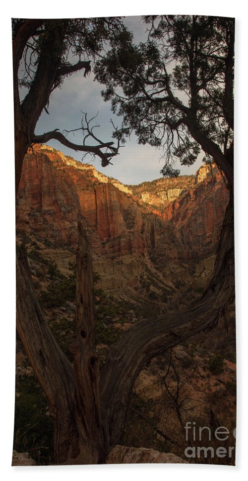 Tree Hand Towel featuring the photograph Tree Heart by Jane Axman