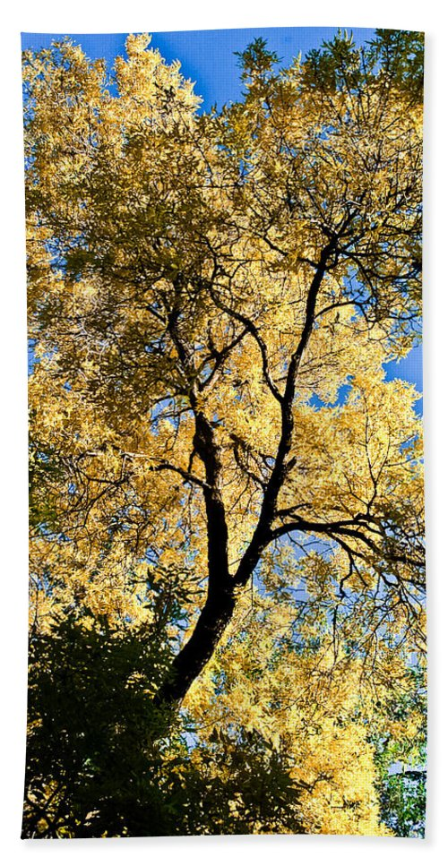 Fall Leaves Bath Sheet featuring the photograph Tree In Fall by Scott Sawyer