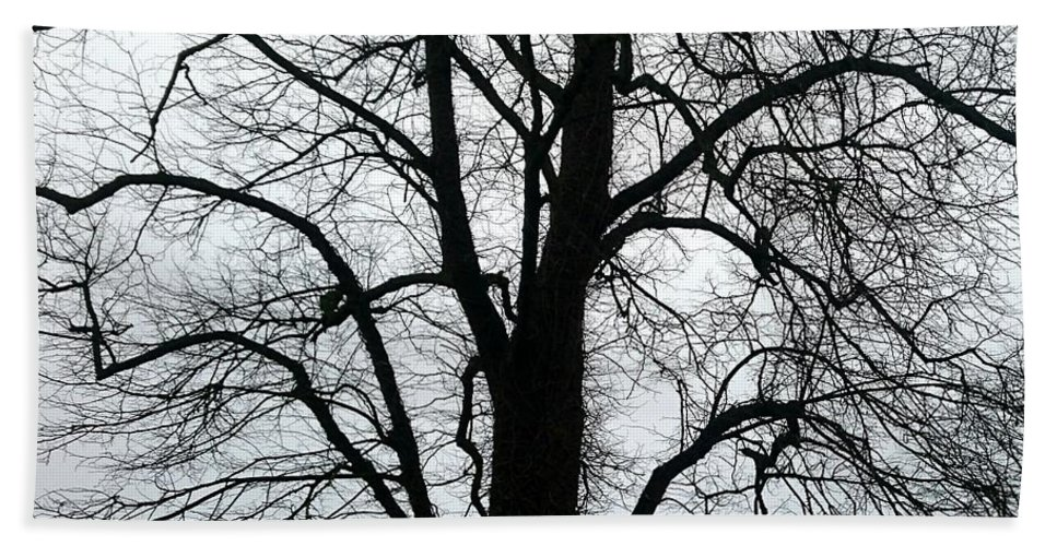 Tree. Countryside. Landscape. Winter. Flowers. Bath Sheet featuring the photograph Tree by Nicholas Rainsford