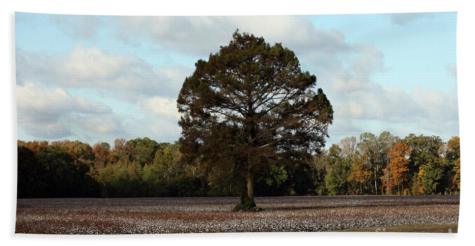 Tree Hand Towel featuring the photograph Tree No Fog by Amanda Barcon