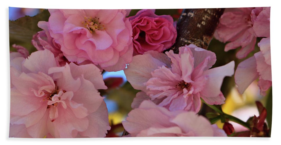 Pink Spring Flowers In Tree Bath Sheet featuring the photograph Tree Of Flowers by Rosalyn Zacha