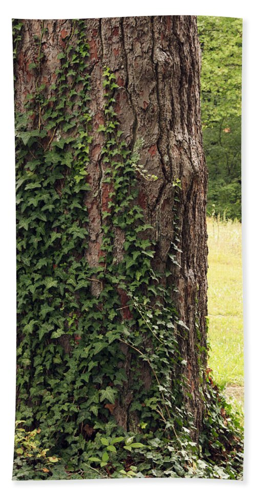 Bark Hand Towel featuring the photograph Tree Of Ivy by Travis Rogers