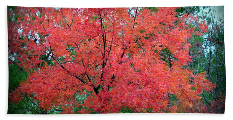 Tree Hand Towel featuring the photograph Tree On Fire by AJ Schibig