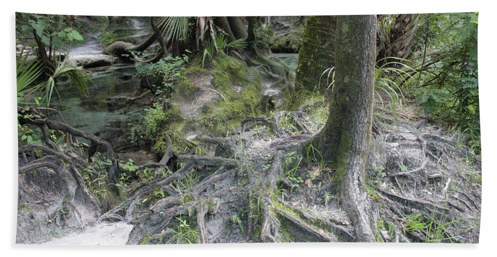 Lithia Springs Bath Sheet featuring the photograph Tree Roots And Lithia Springs by Carol Groenen