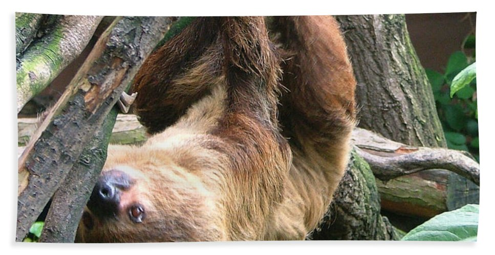 Photograph Bath Sheet featuring the photograph Tree Sloth by Heather Lennox