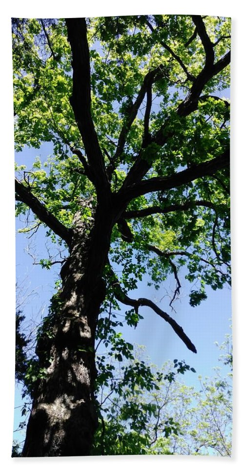 Tree Hand Towel featuring the photograph Tree Top by Alisha Albin