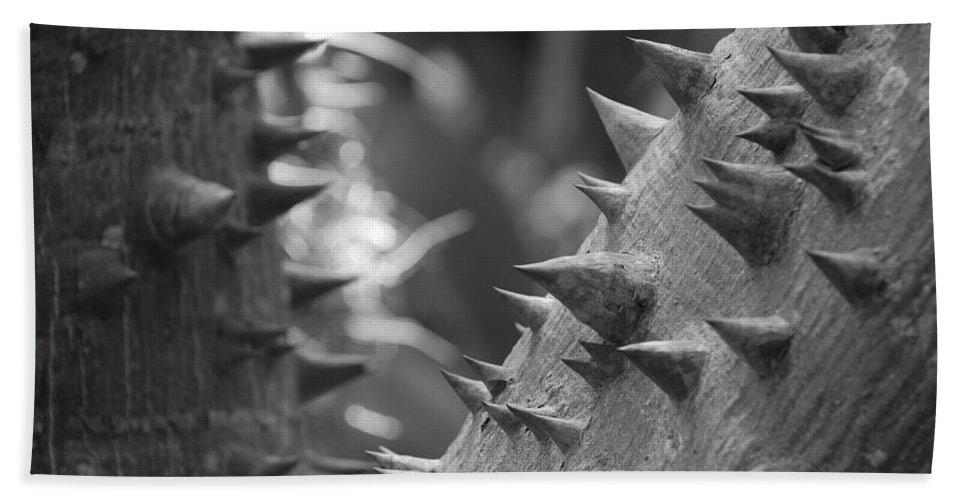 Spike Bath Towel featuring the photograph Tree With Spikes And Thorns by Rob Hans