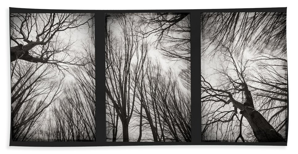 Black&white Bath Sheet featuring the photograph Treeology by Dorit Fuhg