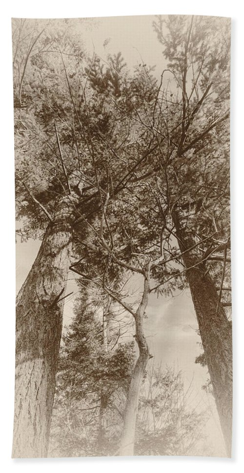 Trees Bath Sheet featuring the photograph Trees Colliding by Kathy Paynter