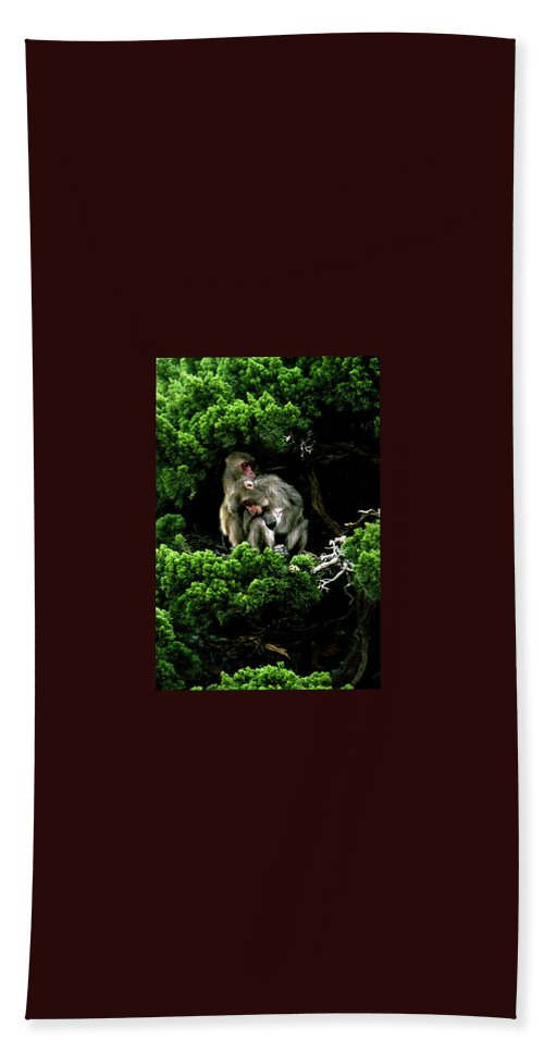Trees Hand Towel featuring the photograph Trees In Japan 10 by George Cabig