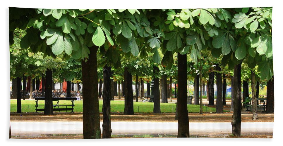 French Garden Hand Towel featuring the photograph Trees Of Tuilieres by Carol Groenen