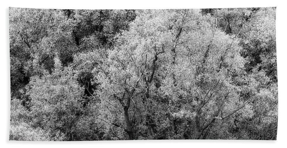 Adda Hand Towel featuring the photograph Trees On The River by Roberto Pagani