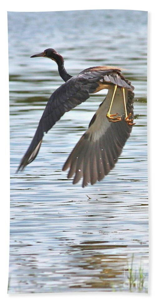 Bird Bath Sheet featuring the photograph Tri Colored Heron Over The Pond by Carol Groenen