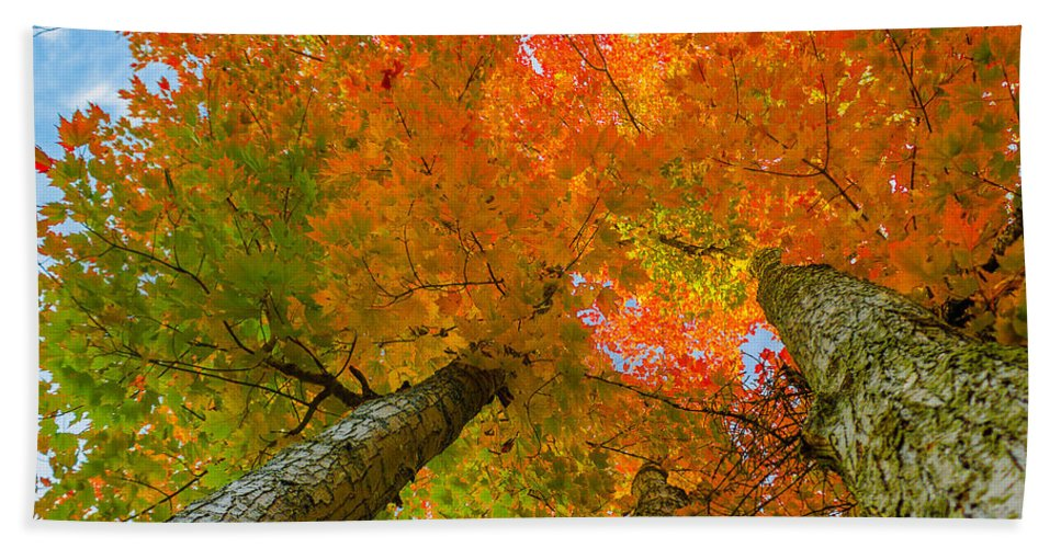 Maple Tree Bath Sheet featuring the photograph Triple The Maples by Tim Kirchoff