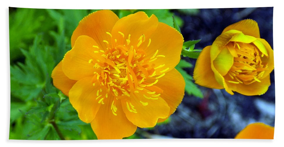 Trollius Bath Sheet featuring the photograph Trollius Blossom by William Tasker