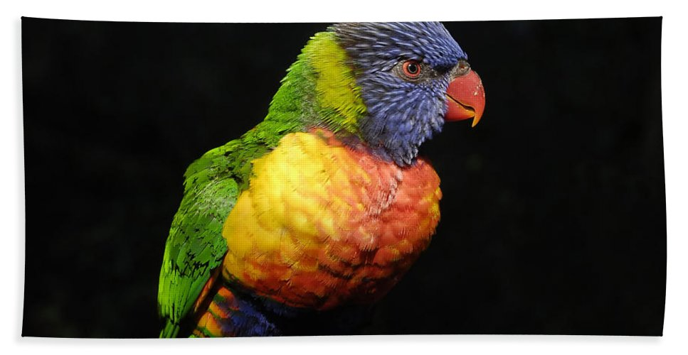 Tropical Hand Towel featuring the photograph Tropical Colors by David Lee Thompson