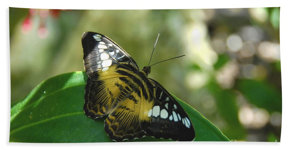 Butterfly Bath Towel featuring the photograph Tropical Garden Beauty by David Lee Thompson